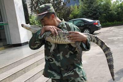 G:\gz\湄公河集团概况\生物科技\生物科技图片\拯救鳄鱼.jpg