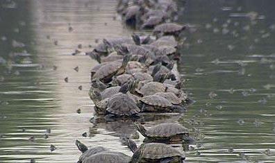 G:\gz\湄公河集团概况\生物科技\生物科技图片\乌龟养殖3.jpg