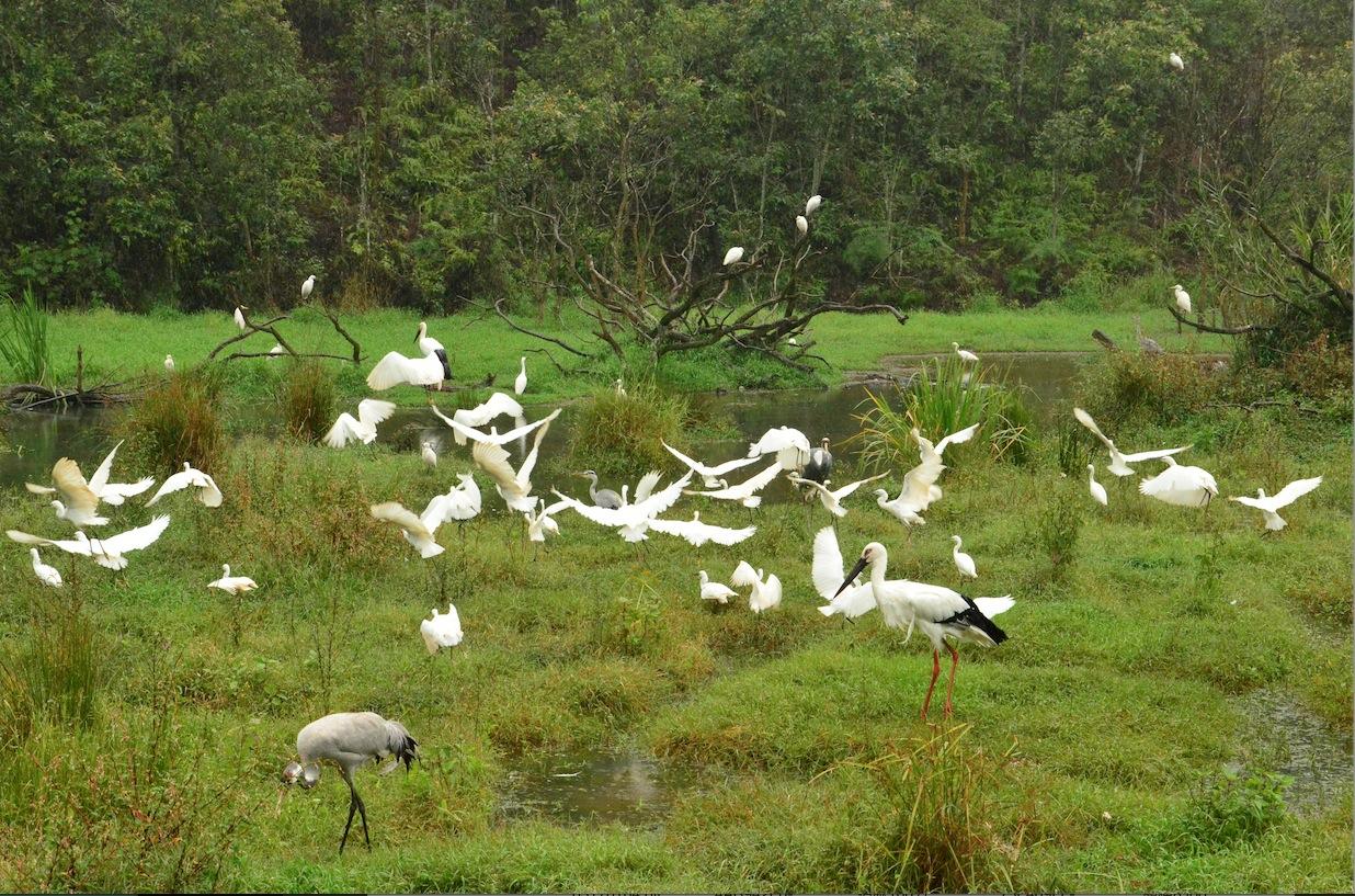 普洱太阳河国家森林公园介绍_普洱太阳河国家森林... -驴妈妈门票